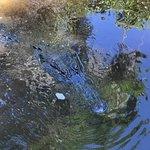Swamp Adventures LLC Picture