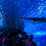 Walkthrough Shark Tunnel