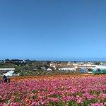 Photo of Carlsbad Flower Fields