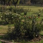 roses at rose garden