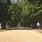 Foto de All Saints Estate & Winery