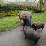 Amanda with two of the pigs.