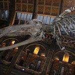 Iconic skeleton.