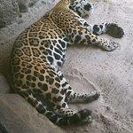 Foto de Jacksonville Zoo & Gardens
