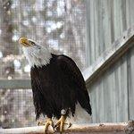 Foto de VINS Nature Center