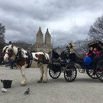 Official NYC Horse Carriage Rides - Central Park Horse Carriage Rides