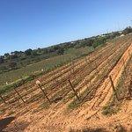 Photo de Quinta dos Vales - Wine Estate