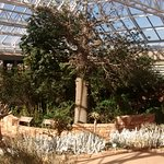 カーステンボッシュ国立植物園の写真