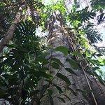Huge (fake) tree