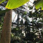 Gorgeous Palms everywhere!