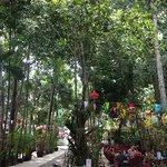 Colourful garden café
