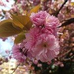 Photo of Shinjuku Gyoen National Garden