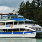Major Marine Tours brand new catamaran the Kenai Fjords 360!