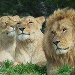 Photo de Réserve Africaine de Sigean