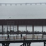 View of sea lion pier from hotel