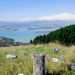 Lyttelton Harbour from top of Port Hills