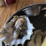 Happy Hour : Oysters