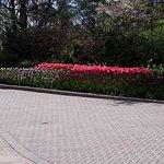 FB_IMG_1524099796191_large.jpg