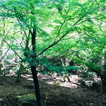 Foto de Momijidani Park