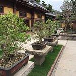 Bonsai trees at the Chi Lin Nunnery