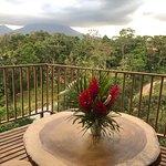 Treehouse balcony view