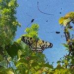 Foto de Siquijor Butterfly Sanctuary