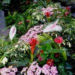 superb tropical plants in flower