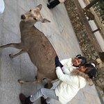 Photo de Parc de Nara