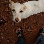 Stray dog begging for food