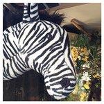 Photo of Le Zebre a Pois