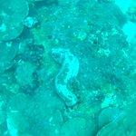 ภาพถ่ายของ Koh Kho Khao Diving
