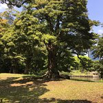 Photo of Hama Rikyu Gardens