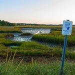 A tidal marsh on the refuge