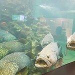 ภาพถ่ายของ สถานแสดงพันธุ์สัตว์น้ำภูเก็ต
