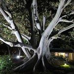 The big tree at night time - stunning.