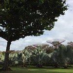 Photo of Supertree Grove
