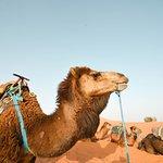 Camel rides - Merzouga Desert Erg Chbbi