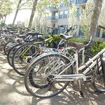 Lots of bikes on campus