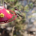 Hummingbird feeder at the Visitor's Center