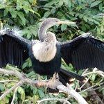 Billede af Cano Negro Wildlife Refuge