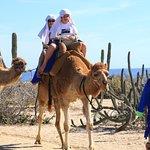 Foto de Outback & Camel Safari