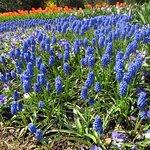 Photo de Longwood Gardens