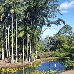 Photo of Maleny Botanic Gardens & Bird World