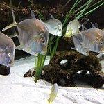 Foto de National Mississippi River Museum & Aquarium
