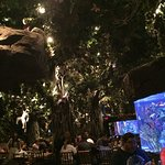 Bild från Rainforest Cafe