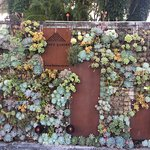 Living garden wall, entrance to Hones Garden