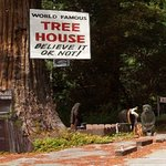 Tours of Redwood National Park   tree house