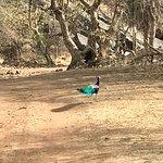 Foto de Ranthambore National Park
