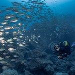 Madeira Diving Center fényképe