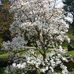 Japanischer Garten Foto